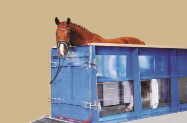 Tapis roulant aquatique pour chevaux Sascotec
