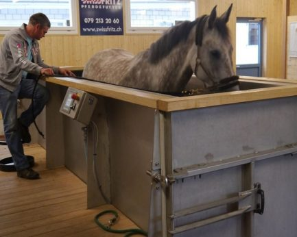 Aquatrainer pour chevaux